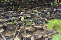 Projects Abroad plants 4000 trees to help Madagascar recover from Cyclone Enawo