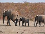 Latest News from our Conservation Project in Southern Africa