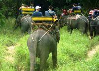 Thailand Conservation 2 Week Special Report