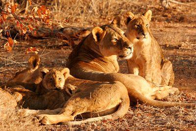 Les volontaires en mission écovolontariat avec Projects Abroad aide à la préservation d'espèces menacées