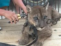 Projects Abroad démarre un partenariat avec une association de défense des animaux
