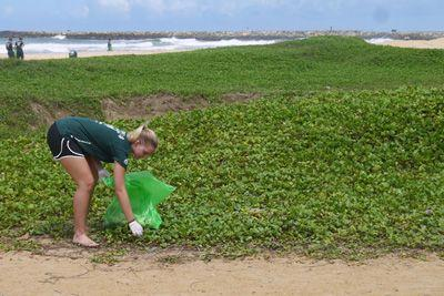 Un volontaire collecte des ordures, durant le nettoyage des plages de Panadura