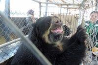 Treize animaux maltraités sauvés d'un zoo informel au Pérou