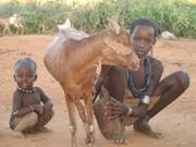 Peut-on aider comme volontaire en Somalie, Corne d'Afrique?
