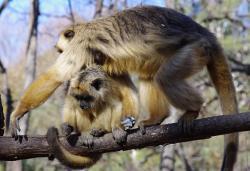 Soins animaliers Argentine