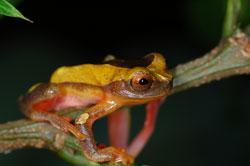 écovolontariat Pérou