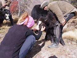 écovolontariat au Népal