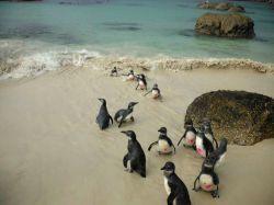 Mission soins animaliers Afrique du Sud