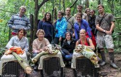 Réintroduction de singes-araignées au Pérou