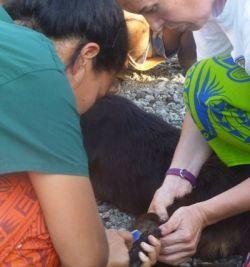 Nouveau projet soins animaliers aux Samoa