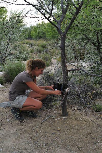 Pose d'un piège photographique pour détecter les différentes espèces présentes dans les fermes en Afrique du Sud.