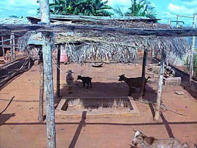 La ferme et ses animaux