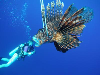 Un volontaire pose derrière un poisson-papillon au Belize