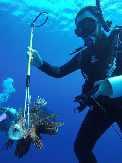 Un écovolontaire mesure un poisson-papillon lors d'une plongée au Belize