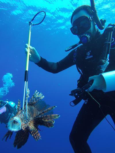 志愿者在伯利兹捕猎狮子鱼,以非常方式保护当地海洋环境