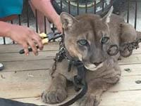 Projects Abroad與國際動物保護組織合作 拯救馬戲團動物重返大自然