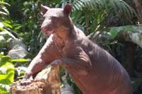 Projects Abroad與ADI成功把獲救動物安置在塔利卡自然保護區