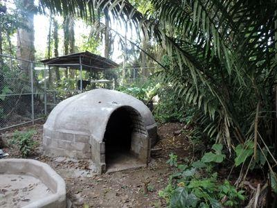 Projects Abroad Conservation volunteers built 300m2 enclosures for the rescued spectacled bears, complete with big pools and shaded caves at Taricaya Ecological Reserve
