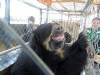 十三隻受虐動物在秘魯私營動物園成功獲得營救
