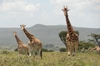 Projects Abroad Conservation project in Kenya transfers from Kigio to Soysambu Conservancy