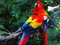Projects Abroad Costa Rica – Un progetto per proteggere l'Ara Scarlatta
