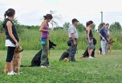 Centro di addestramento cani