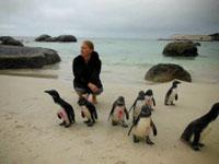 Projects Abroad Sudafrica festeggia la reintroduzione di 18 pinguini