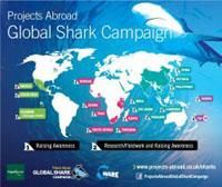 Projects Abroad si impegna a salvaguardare gli ecosistemi marini con la Global Shark Campaign