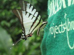 farfalla-maglietta-volontario
