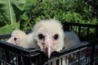Un nuovo riconoscimento per il progetto di recupero specie a rischio in Messico