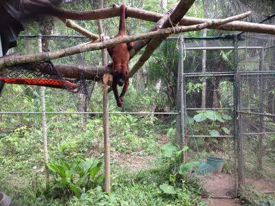 scimmia-riserva-perù