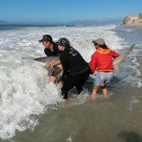 Nuovo progetto di tutela degli squali in Sudafrica