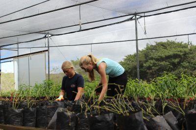 I volontari alle Galapagos, si dedicano alla coltivazione