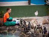 世界ペンギンデー in 南アフリカ!