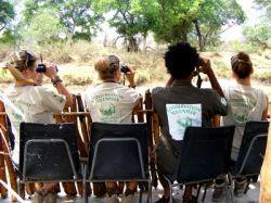 ボツワナで行われる野鳥調査