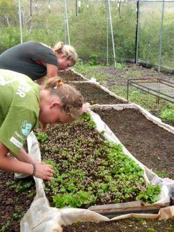 ガラパゴス諸島の園芸場で活動するボランティア