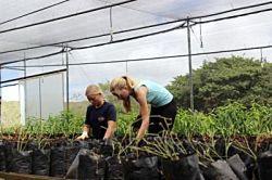 ガラパゴス諸島で植物を扱うボランティア