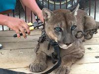 ペルーで虐待を受けた動物を保護しました