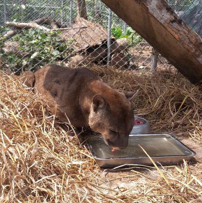 新しくタリカヤ自然保護区に来たサルが新しい住みかに入るところ