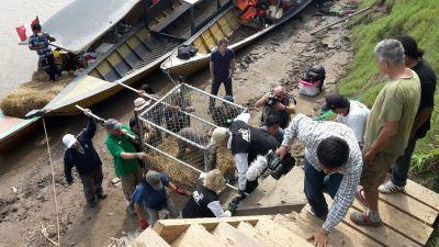プロジェクトアブロードとADIがタリカヤ自然保護区へ救助された動物を移送