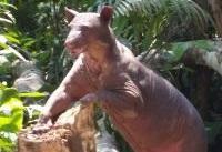 サーカスから保護された動物たち がアマゾン熱帯雨林に移されました