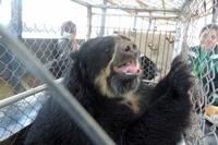 ペルーで13匹の動物が、抜き打ち調査で保護される