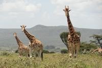 ケニアの環境保護プロジェクトが拠点を移動