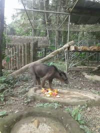 保護されたメガネグマが、ペルーのタリカヤ自然保護区で元気を取り戻す!