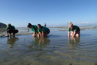 Vrijwilligers planten mangrovekiemzaden