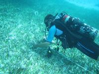 Natuurbehoud vrijwilligers in Belize beperken de uitheemse koraalduivel