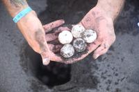 Succesvolle samenwerking met lokale organisatie voor bescherming zeeschildpadden in Mexico