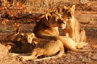 Projects Abroad fortsätter att stödja etiskt volontärarbete med vilda djur