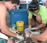 Cementing coral fragments