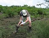 Land Clearance